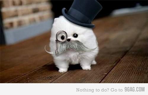 mustachpip
