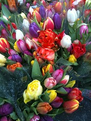 A Riot of Color (whispaws) Tags: flowers switzerland tulips zurich utata bahnhofstrasse iphone whispaws tw256 utata:project=tw256
