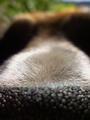 entrecejas (JoseFDoRey) Tags: dog animals nose perro nariz pelos pelitos