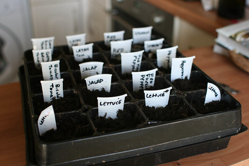 Sowing the seeds of veg