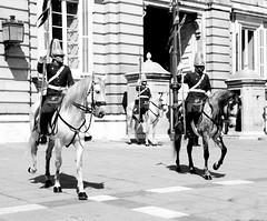 Caballos (clausmatron) Tags: madrid espaa horse canon caballo caballos spain abril espana april palacioreal 2014