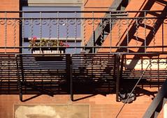 Escapism IX: It's A Plant! (nrg_crisis) Tags: fireescape tribeca nyc fence