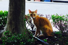 Today's Cat@2016-10-07 (masatsu) Tags: cat thebiggestgroupwithonlycats catspotting pentax mx1