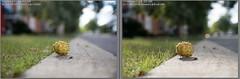 Canon 5D Mark III vs Fujifilm X-T2 (Micboule) Tags: xt2 canon 5d mark iii fujifilm 1655mm f28 2470mm