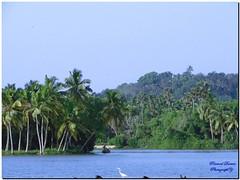 Poovar Beach, Trivandrum, Kerala (Pramod Darvin) Tags: nature kerala beaches trivandrum poovar malayalikkoottam beachesofkerala