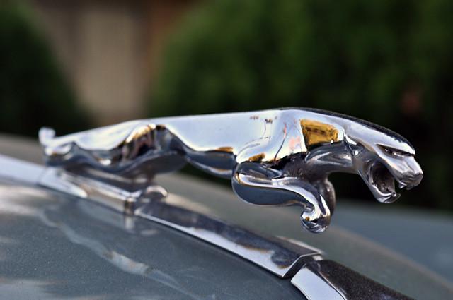 jaguar, vintage car, jaguar symbol, DSC_0003