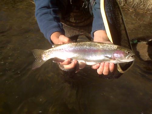 truckee fish