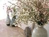 Douces couleurs (Lhise) Tags: flower home fleur wax maison showyourhouse genêt