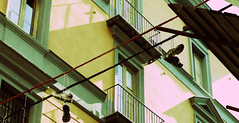 Shoefiti (markap) Tags: xpro xprocess bronx crossprocess bolas crossprocessing napoli scarpe digitalxpro lacci digitalxprocess shoefiti legate lineeelettriche scarpevolanti lineetelefoniche