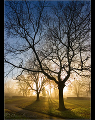 Reach.......... (Digital Diary........) Tags: park trees mist colour backlight mood atmosphere reach menace contrejour chrisconway goodlight