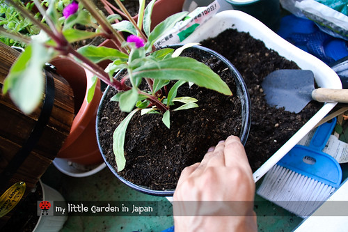 How-to-plant-in-a-container-1
