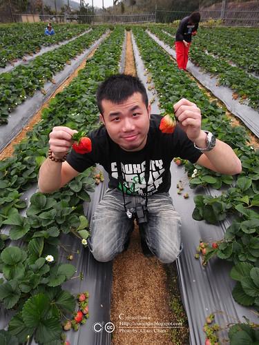 大湖草莓之旅 - 大力推薦 大山農園 R1039327