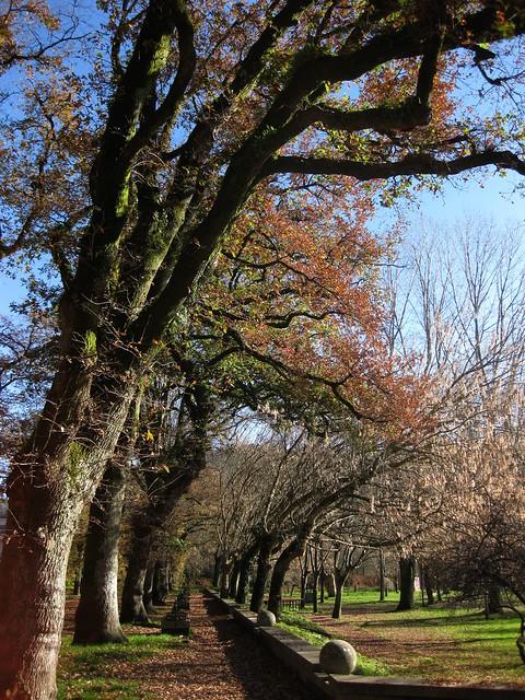 Carballeira e parque dos Choróns (Caldas de Reis)