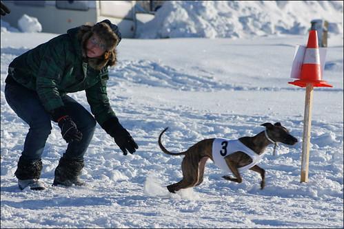 Nord Cup Schnee Coursing Tschechien von Harriet Kuijpers für windhundzeitung.de