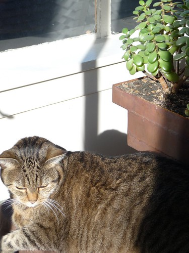 Lucy & Jade Plant like sun