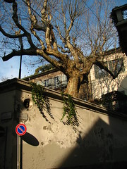 Via Amedei, Milano, febbraio, 2011. (B Plessi) Tags: italy milan tree italia milano via albero arbre amedei