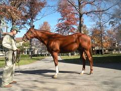 CZ6 (Gordon Calhoun) Tags: horseracing lanesend cityzip
