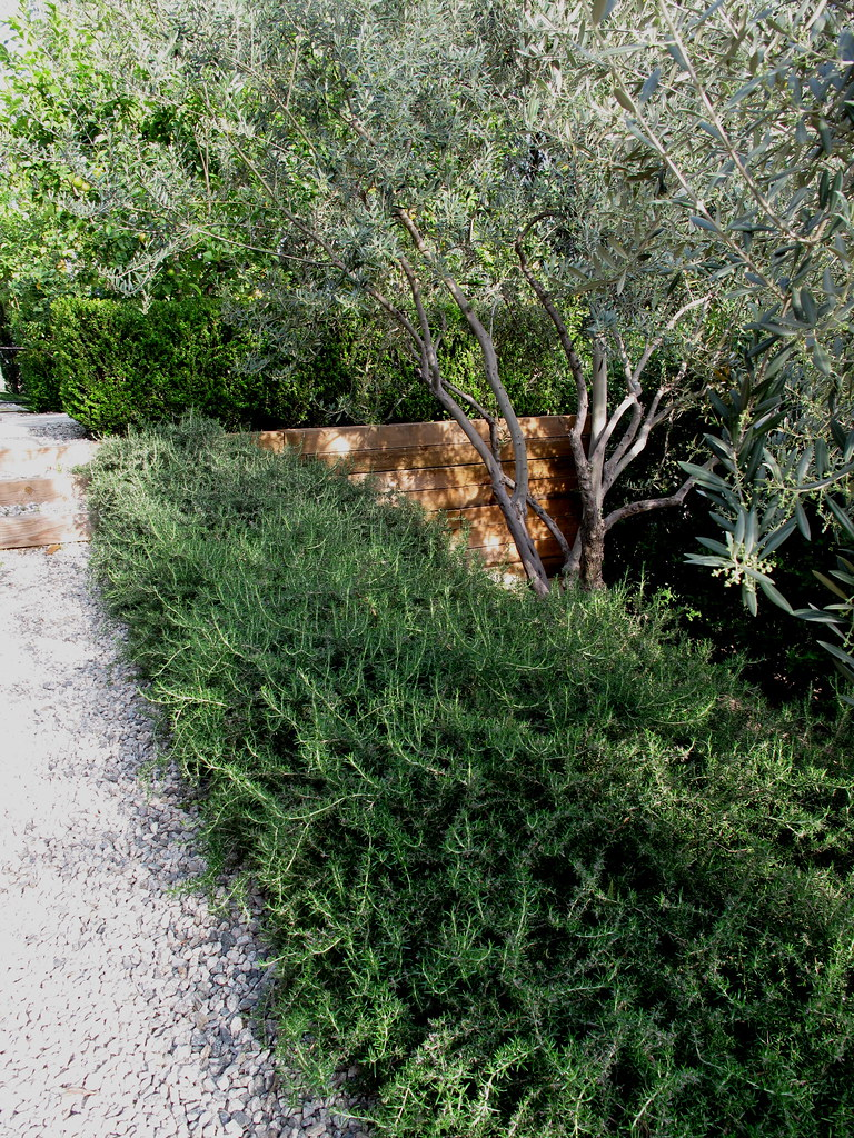 A low hedge of rosemary lines a tidy gravel path