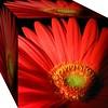 orange rote Gerbera, cube box Schachtel Würfel (eagle1effi) Tags: tuebingen tubingen germany deutschland badenwuerttemberg württemberg stadttübingen macro canonmacro sx1isbest vibrant vivid würfel supermacro010cm gerbera canonpowershotsx1is bridgecamera nature blume naturemasterclass flora yourbestoftoday fauna eagle1effi supermacro supermacroon2 foliage blumen natur damncool sx1 canon powershot flower fiori fiore flowers schachtel orange city stadt tübingenamneckar cube box beautifulcityoftubingengermany beautifulcityoftübingengermany tubinga tübingen dibengâ dibenga effiart kunst erwin effinger edition tubingue flickr bestof art artistic ae1fave