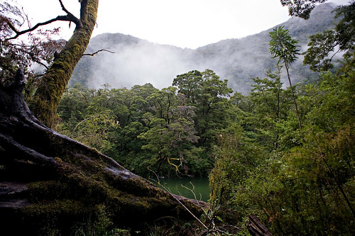 Milford Track, 2011