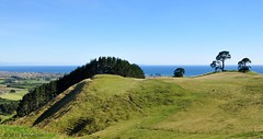 Papamoa Hills, Bay of Plenty (Kiwi~Steve) Tags: newzealand tree landscape nikon nz northisland tauranga bayofplenty naturesfinest mountmaunganui papamoa nikond90 papamoahills