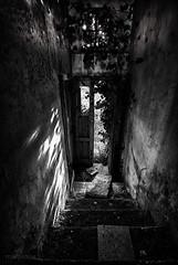 scale (ma[mi]losa) Tags: scale nikon decay ombre porta luci d200 novoli gradini vegetazione abbandono 2011 decadenza sopravvento casolareabbandonato mamilosa micheledefilippo rivincitadellanatura