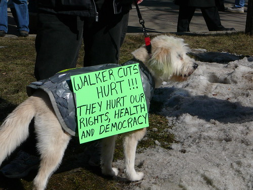 AnotherProtestDog