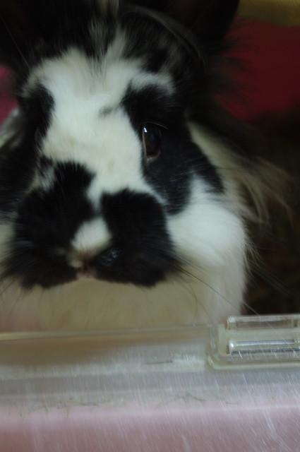 兔兒子一張流