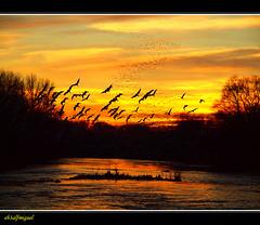 Puesta de Sol y Pajaros (eb3alfmiguel) Tags: atardecer spain agua aves cielo lleida garcilla