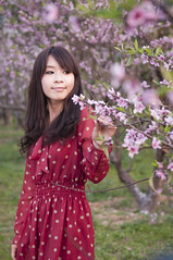 [Free Image] People, Women, Asian Women, Cherry Blossoms, Chinese, 201103010900