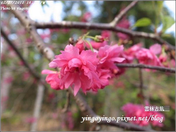 雲林古坑_20110227_R0018266