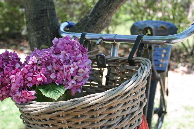 Romantic Bicycle