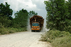 DSC_0610 (mitrataj) Tags: paper sumatra indonesia april redd acacia papermill deforestation riau pulpwood riauandalanpulppaper