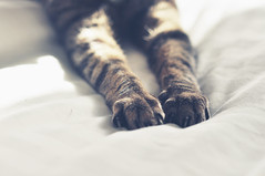 xxx (eleanor doughty) Tags: summer sun cat bed doughty paws eleanor duvet brushingboots