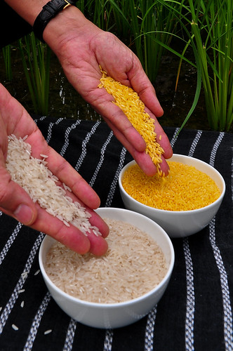 Golden Rice is being developed to help address vitamin A deficiency.