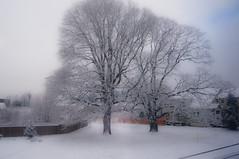 Snow on 2/24/11