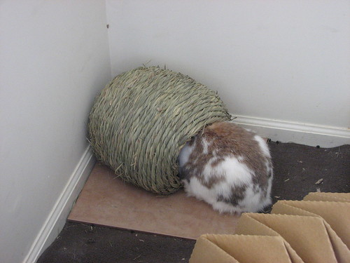 betsy with her head in the hay ball thing