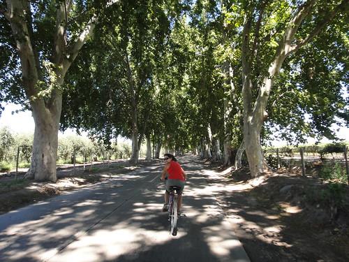 Biking to Wineries in Mendoza