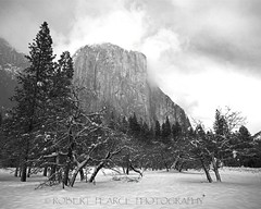 El Capitan and Trees in Winter,  February 26, 2011 (Robert Pearce Photography) Tags: california trees winter blackandwhite bw snow monochrome yosemite february elcapitan yosemitevalley 2011 nikond200 robertpearce robertpearcephotography
