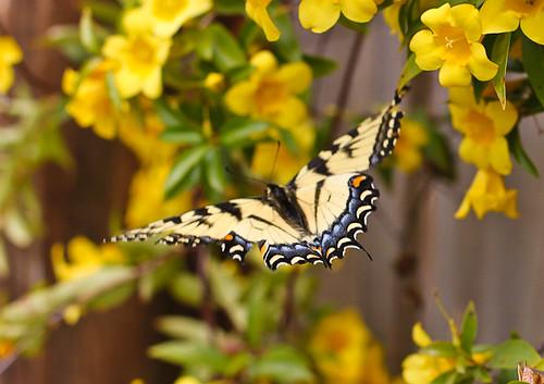 Butterflies-1206