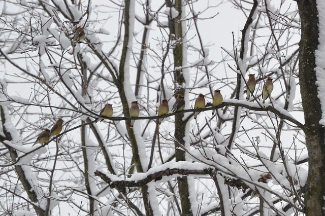 birds sooc