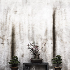 Wall (Jonathan Kos-Read) Tags: china old flower wall delete9 asian delete5 delete2 delete6 delete7 save3 delete8 delete3 save7 save8 delete delete4 save save2 save9 save4 bonsai save5 save10 save6 penjing savedbydeletemeuncensored