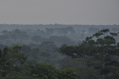 Jungle at dusk