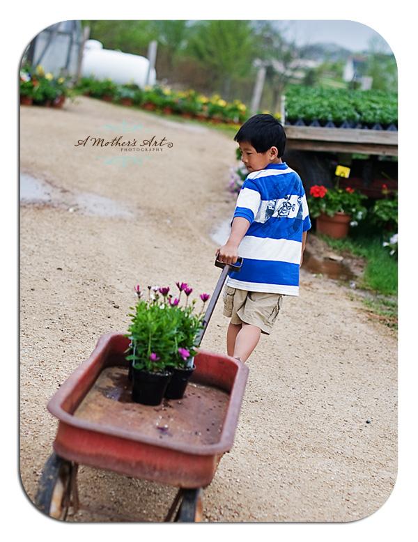 Flower farm 7