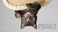 PEGGY (Oliver Pietern) Tags: cat canon germany deutschland kitty domestic nrw katze paws peggy shelter suchen oberhausen tierheim homeles tierschutz katzenhilfe hoschie