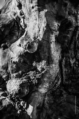 Natura Morta (imagomagia) Tags: art artofvisuals artphotography artphoto blackandwhite blackandwhitephotography composition conceptualphotography fineart fineartphotography forest magicrealism magicalrealism monochrome monocromatic naturamorta nature noiretblacphotographie noiretblanc noiretblancphotographie studies tree trees