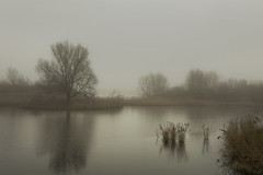 (Pieter Musterd) Tags: tree water rain photoshop canon eos pond wasser raw sad nederland thenetherlands boom rainy 5d somber arbre baum regen flevoland drizzle vijver triest zeewolde cs4 regenachtig druilerig motregen canoneos5dmarkii pietermusterd colorefexpro30 photoshopcs4 5dmarkii ooievaarsplas