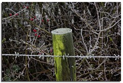 fence post-1 (lovestruck.) Tags: winter nature pentax country january views wiltshire floods kennetavoncanal 2011 seend pentaxk10 pentaxart seendcleeve