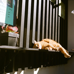 meowvelous day (doistrakh) Tags: travel 120 6x6 tlr film sunshine japan rolleiflex cat mediumformat square feline afternoon superia vintagecamera  135 realaace kansai uji fijifilm 35e planar  twinlensreflex  carlzeiss fujicolor colornegativefilm f75mm vintageanalogue