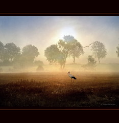 Stork in golden Field (h.koppdelaney) Tags: morning trees light mist art nature fog digital photoshop gold peace symbol dream picture frieden fairy harmony pace dreamworld relaxation stillness tale stork calmness tranquillo stille koppdelaney dwcfflandscape